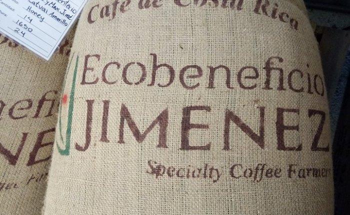 Cogiendo café en EcobeneficioJiménez