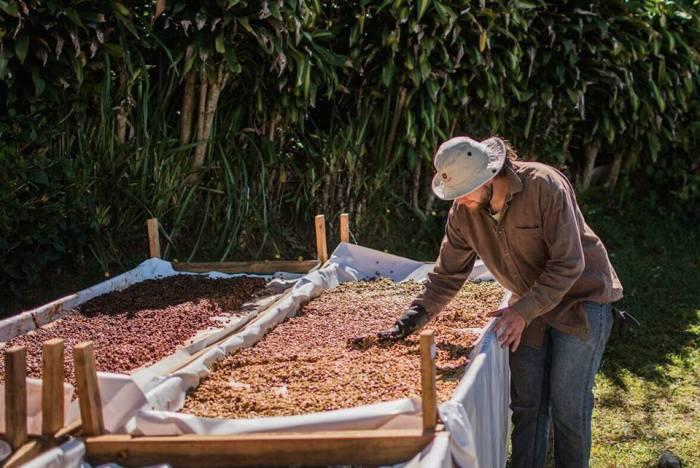 Baristas y cosecha 2017 EcobeneficioJiménez